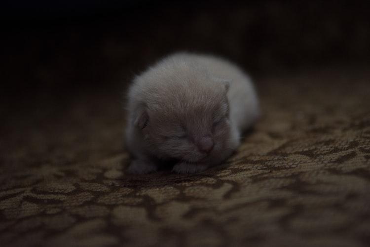 Приучение котят к лотку