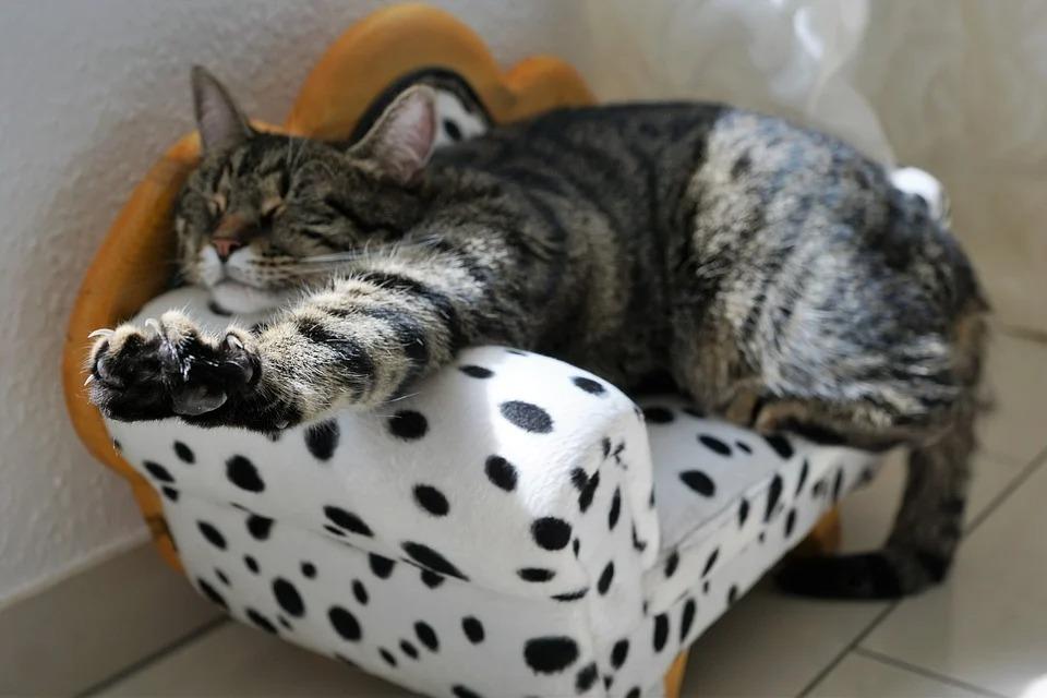 Зачем нужны антицарапки для кошек