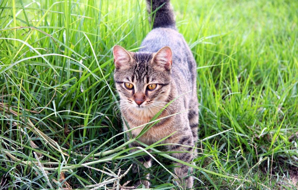 Кот трясет хвостом во время охоты
