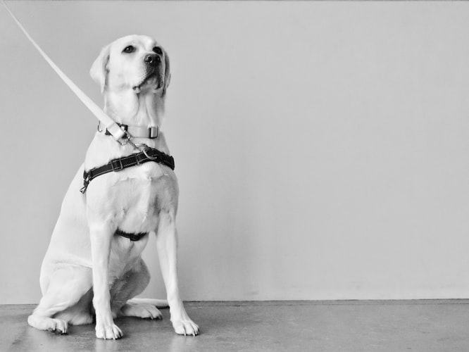 как научить собаку командам на курсах ОКД