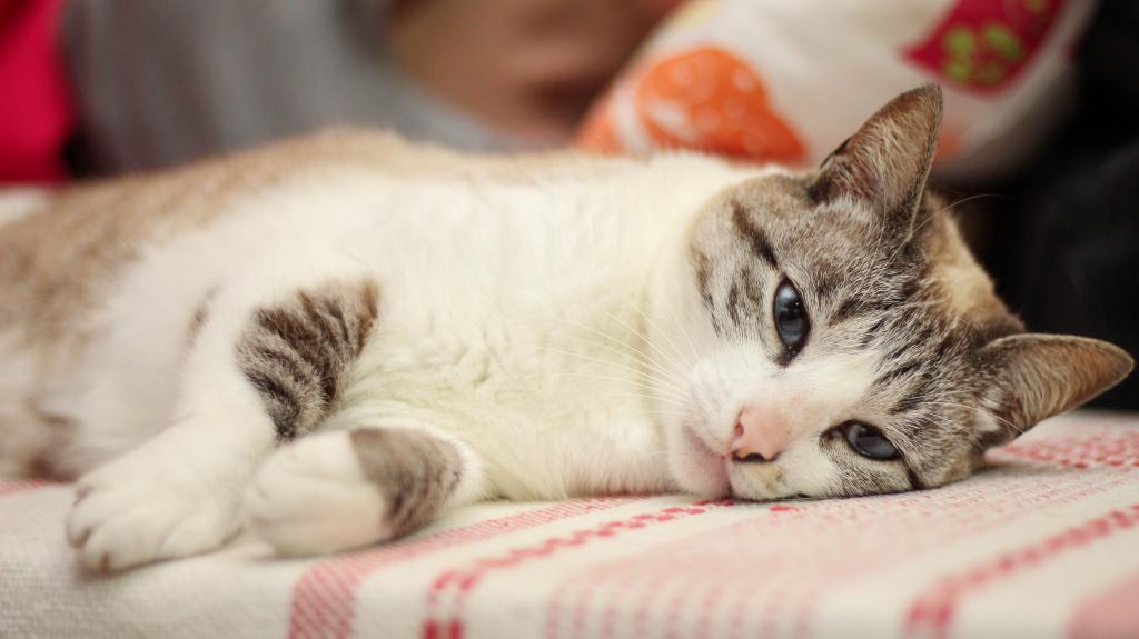 Выход кошки из наркоза после стерилизации
