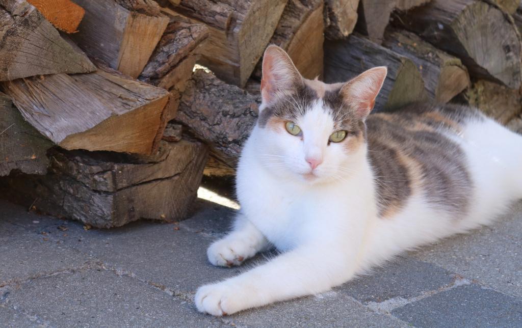 Вероятность смерти у кота с твердым животом