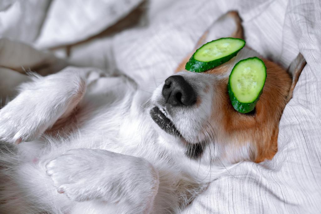 Основы гигиены глаз у собаки