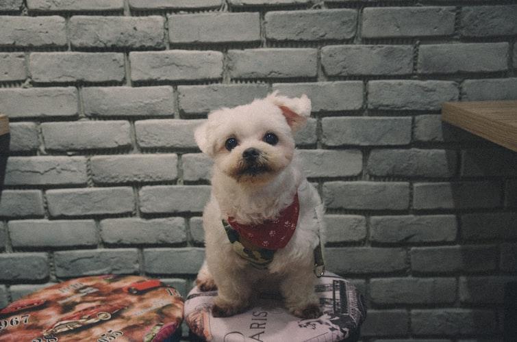 Преимущества и недостатки трусов для собак во время течки