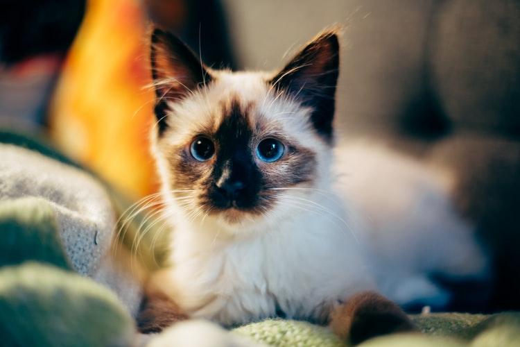 Как помочь котенку привыкнуть к дому