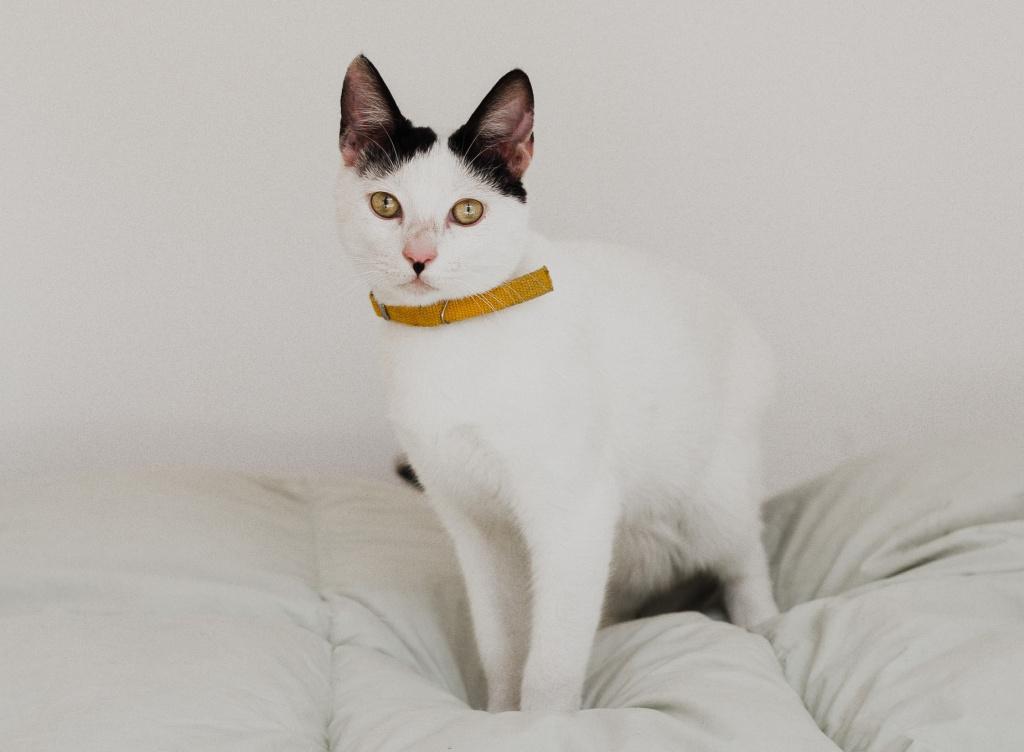 нужен ли коту ошейник