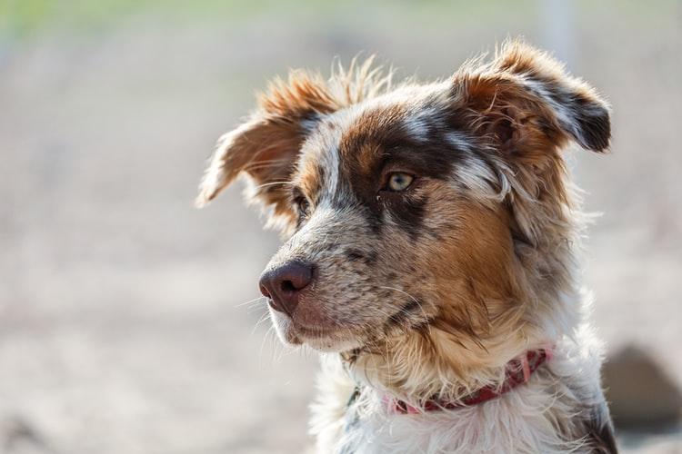 Мифы о кастрации собак