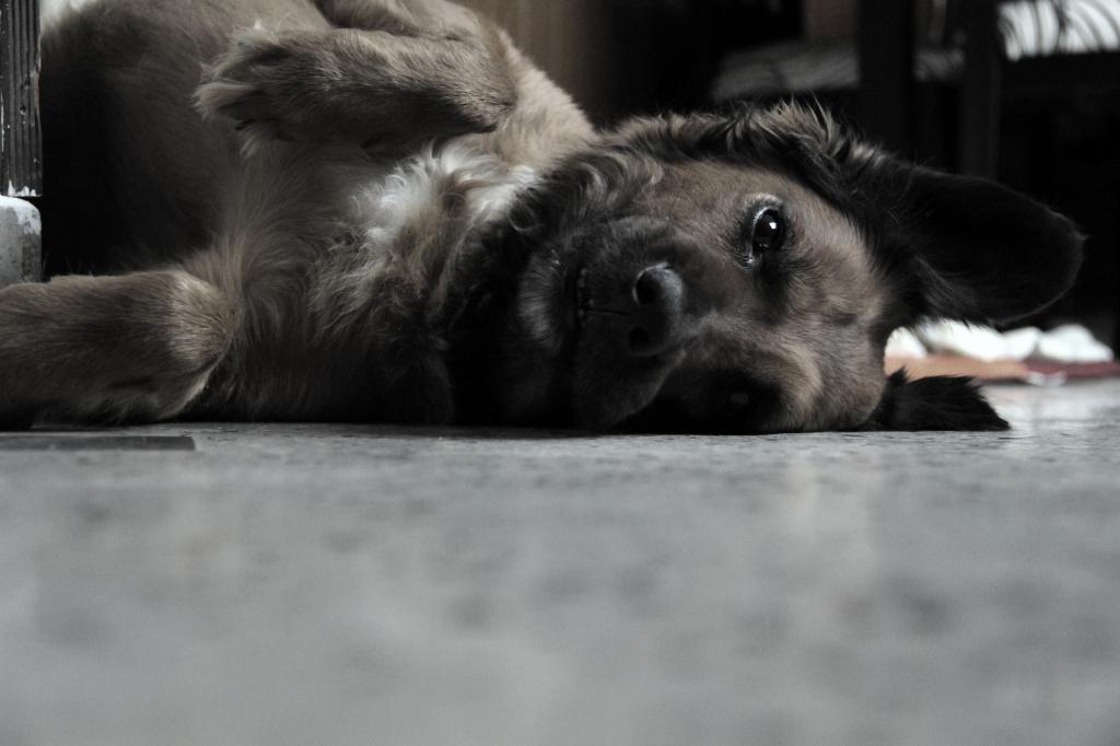 Как успокоить щенка или собаку, когда они бесятся