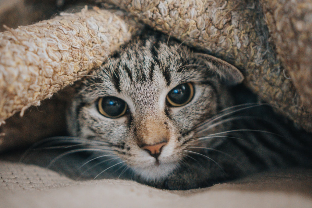 Лечение и терапия при сердечной недостаточности у кошек
