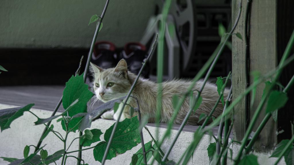 Признаки первой беременности у кошки