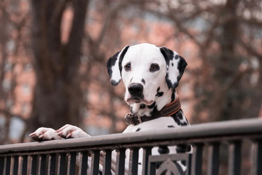 Предпочтительный метод кастрации собак