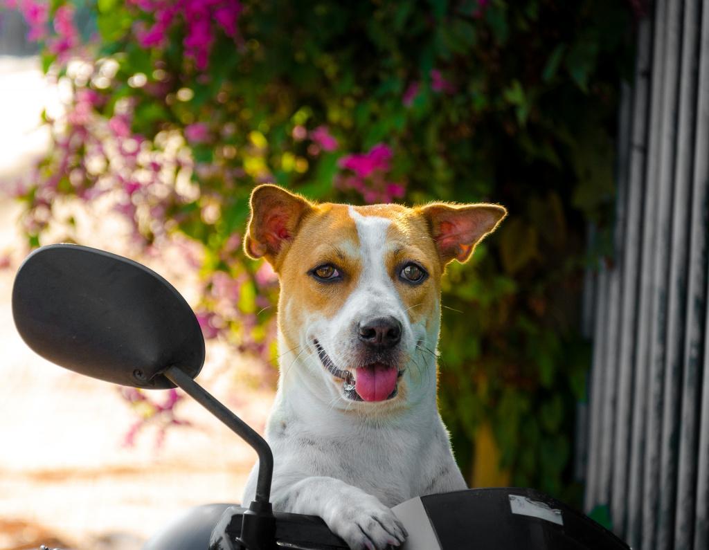 Первая течка у собаки и ее особенности