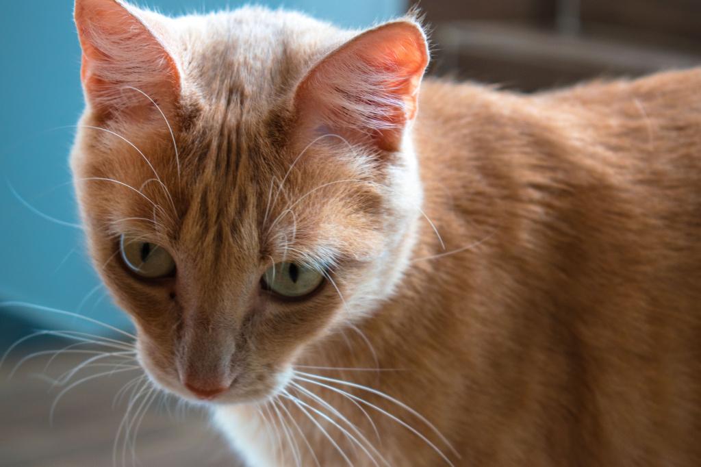 Диагностика отказа лап у кошки