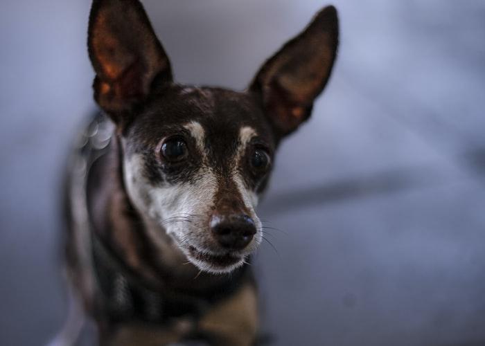биокан от бешенства собаке