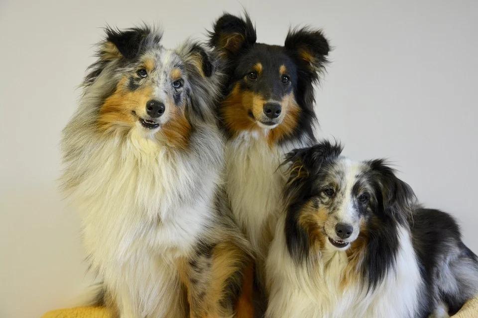примерный рацион для собак