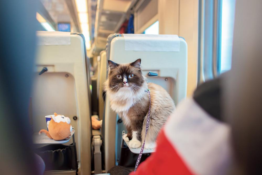 Подготовка для перевозки кошки в поезде