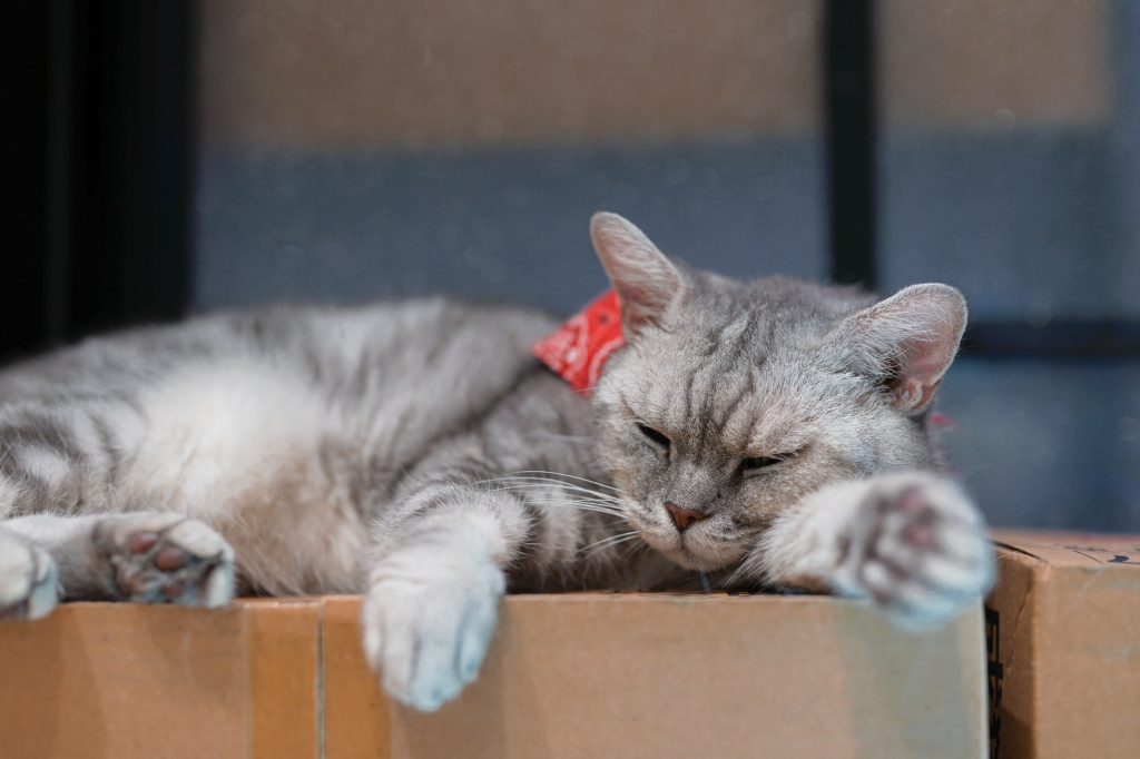 Состояние кошек после родов