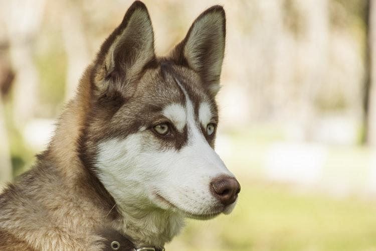 Как сдавать анализ крови у собак
