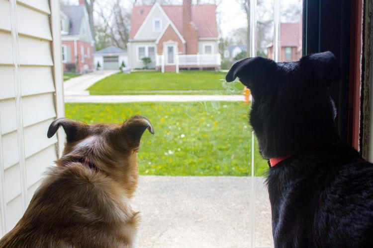 пути заражения собак власоедами