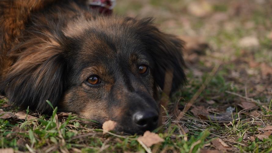 кровь в кале у собаки из-за травмы