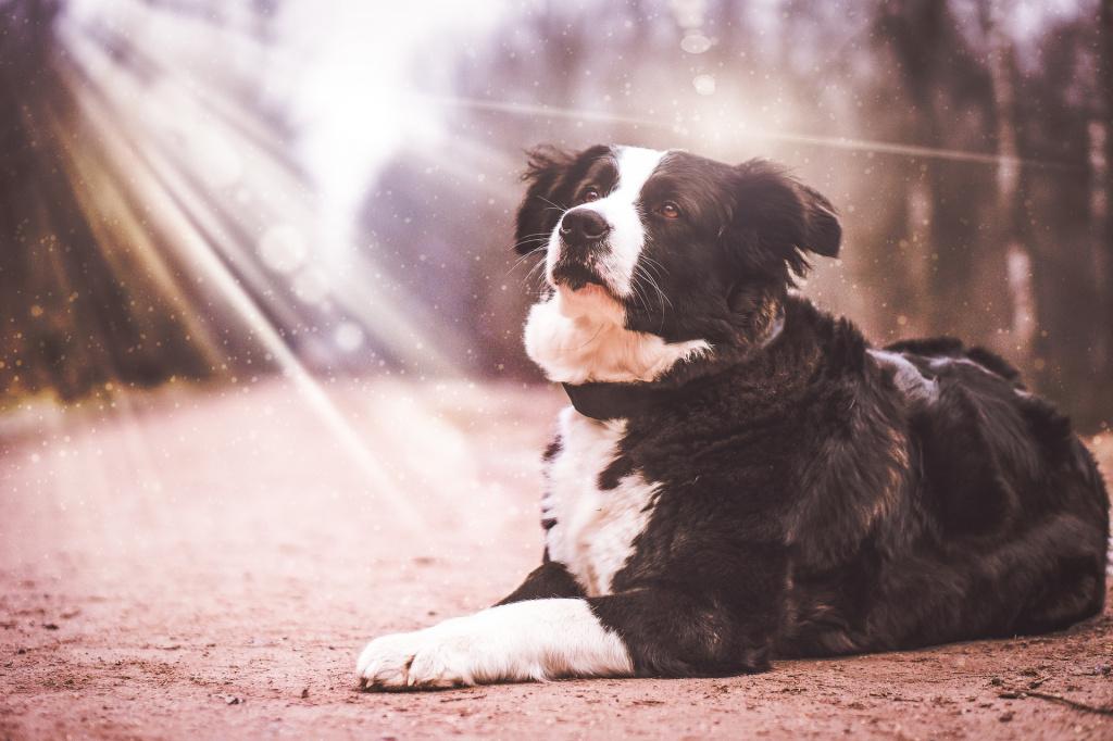 Осложнения при беременности у собак