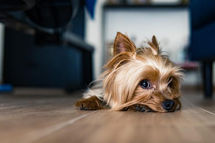 Симптомы появления шишек у собак