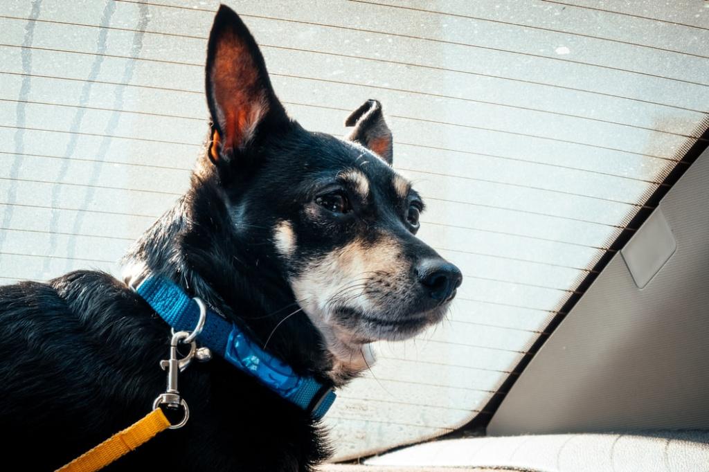 помощь врача при вздутии живота у собаки