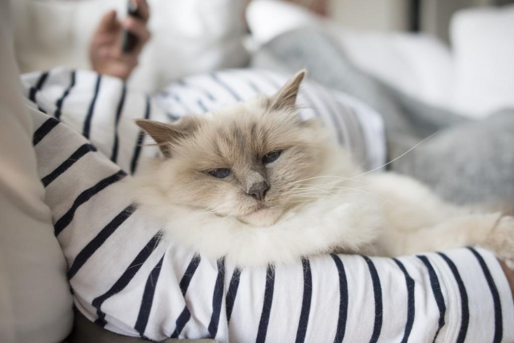 Болезни сердца у кошек с симптомами, похожими на сердечную недостаточность