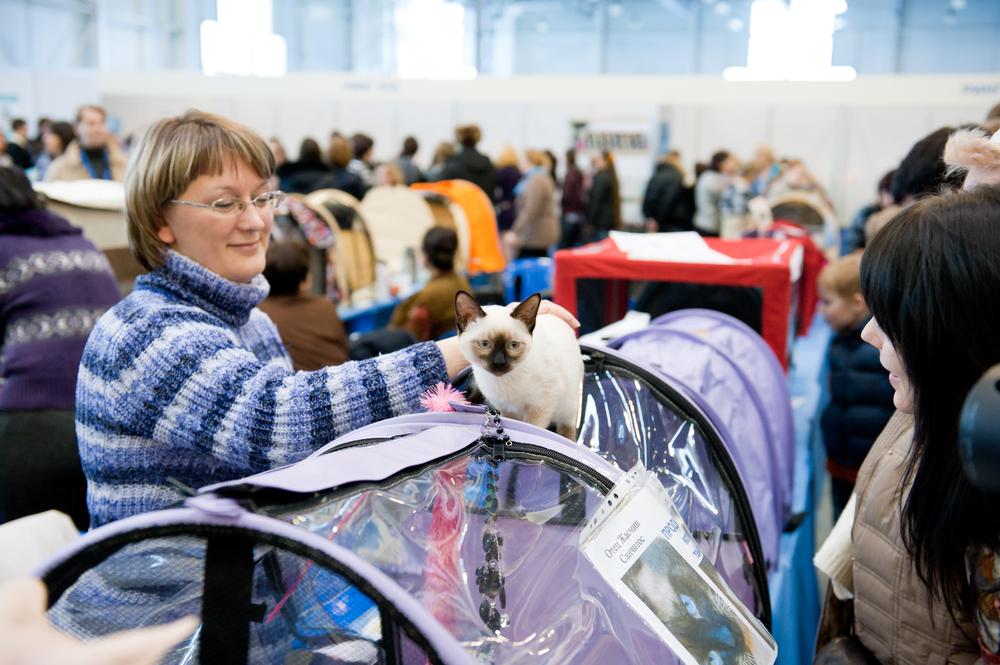 Какая переноска для кошек лучше: выставочная палатка
