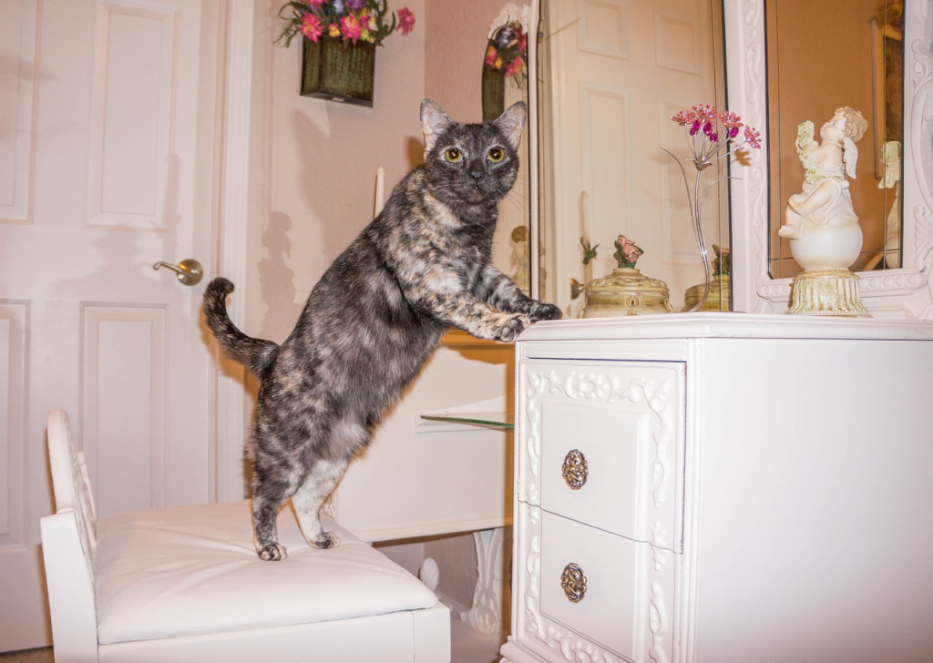 Могут ли коты быть трехцветного окраса