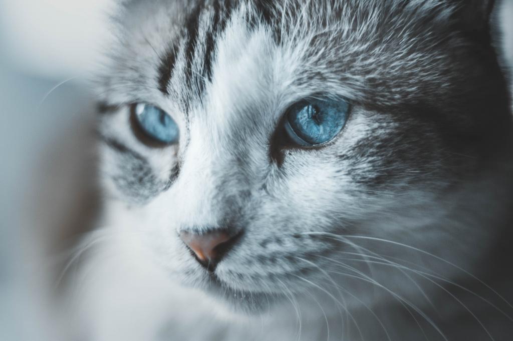 Осложнения у кошки после стерилизации
