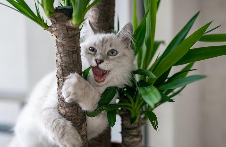 Чем опасно поедание наполнителя для кошек
