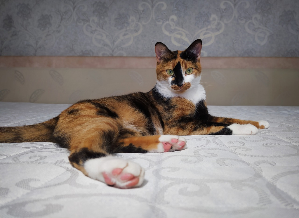 Могут ли коты быть трехцветными?