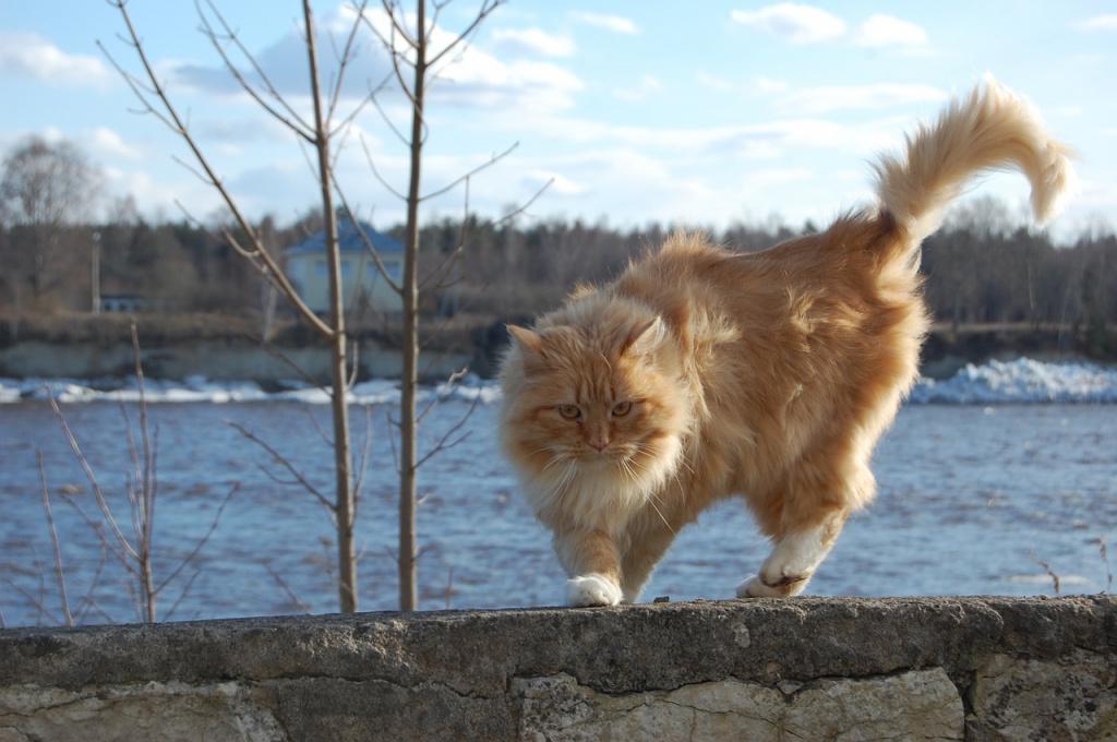 По какой причине кот дергает хвостом