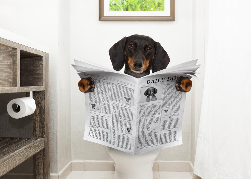 профилактика запора у собак