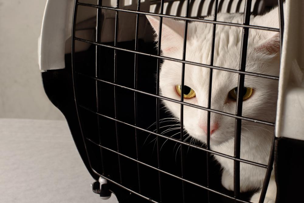 Успокоительные средства для перевозки кошки в поезде