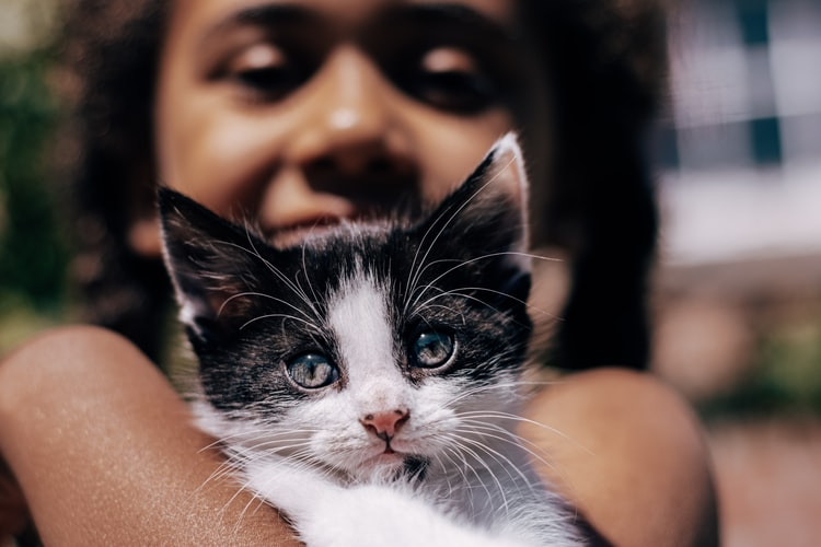 Способна ли кошка слушаться человека