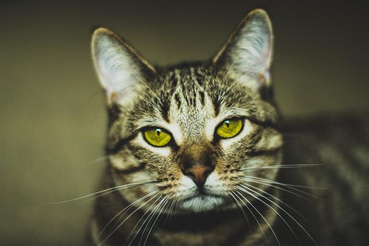 Зрение кошки