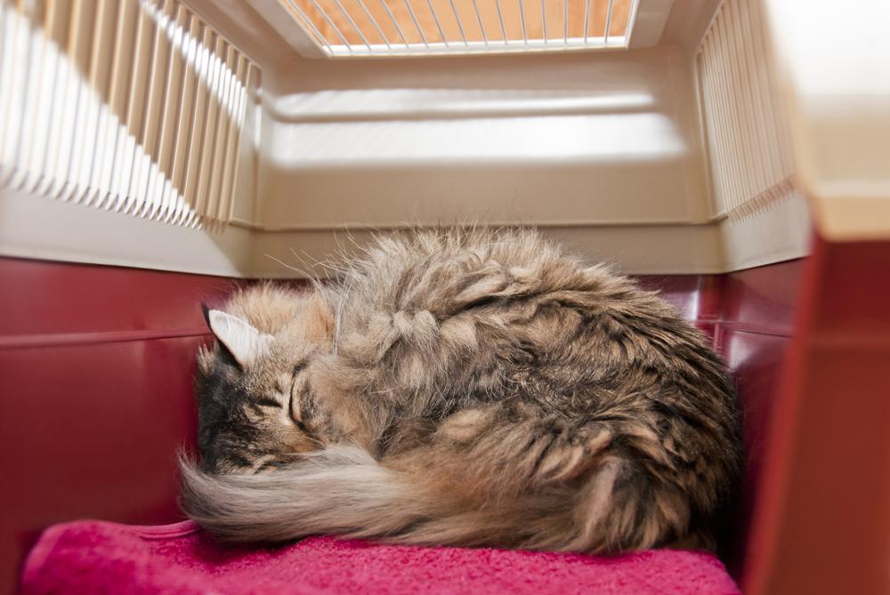 Какая переноска для кошки подойдет больше всего