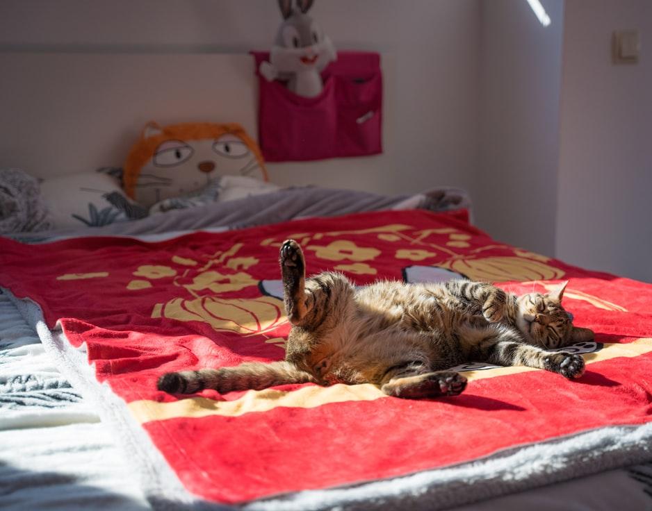 Кот храпит от лишнего веса