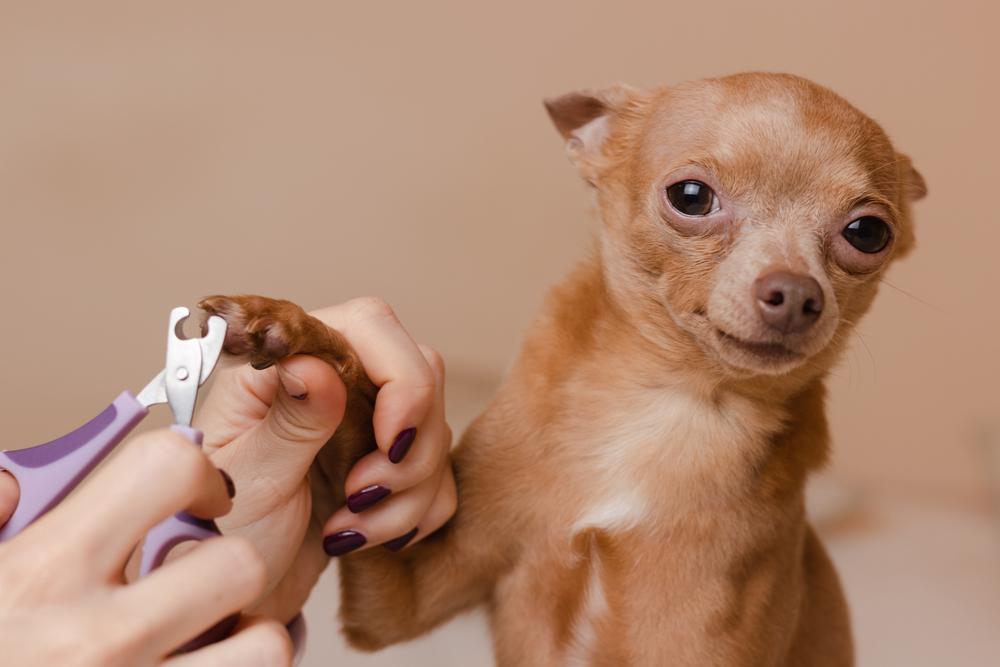 Как часто стричь когти собаке