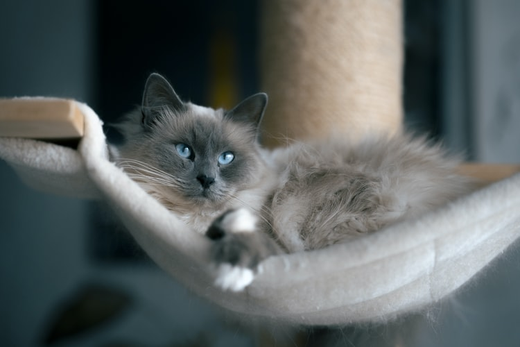 Чем полезно мурлыканье кошки для человека