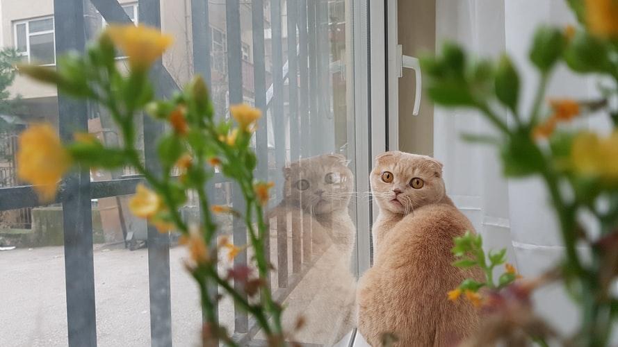 Как кот гадит