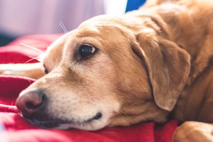 Отклонения в клиническом анализе крови у собак