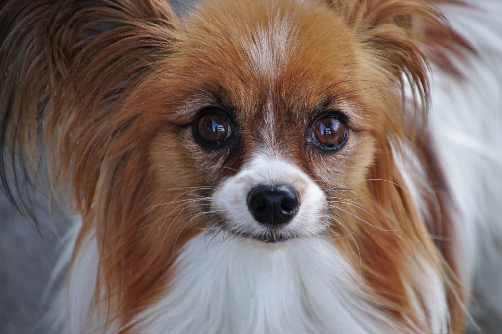 как лечить мутные глаза у собаки