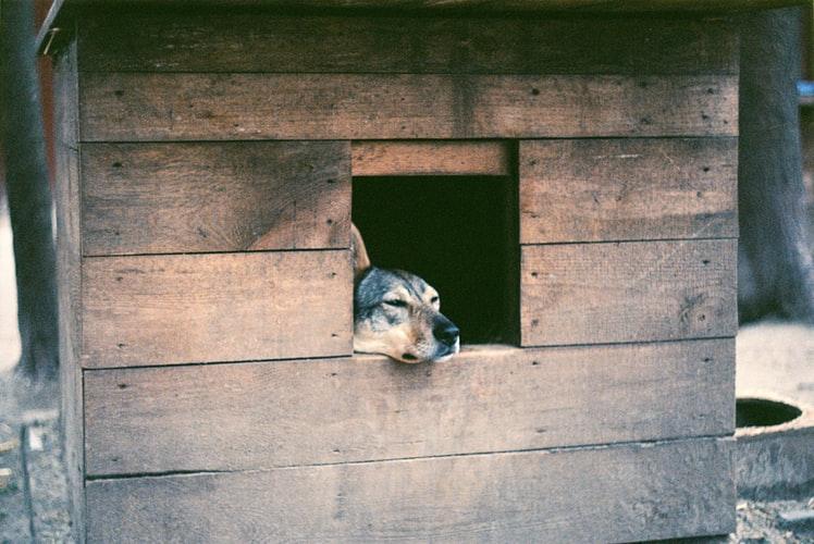 Материал для будки для собаки