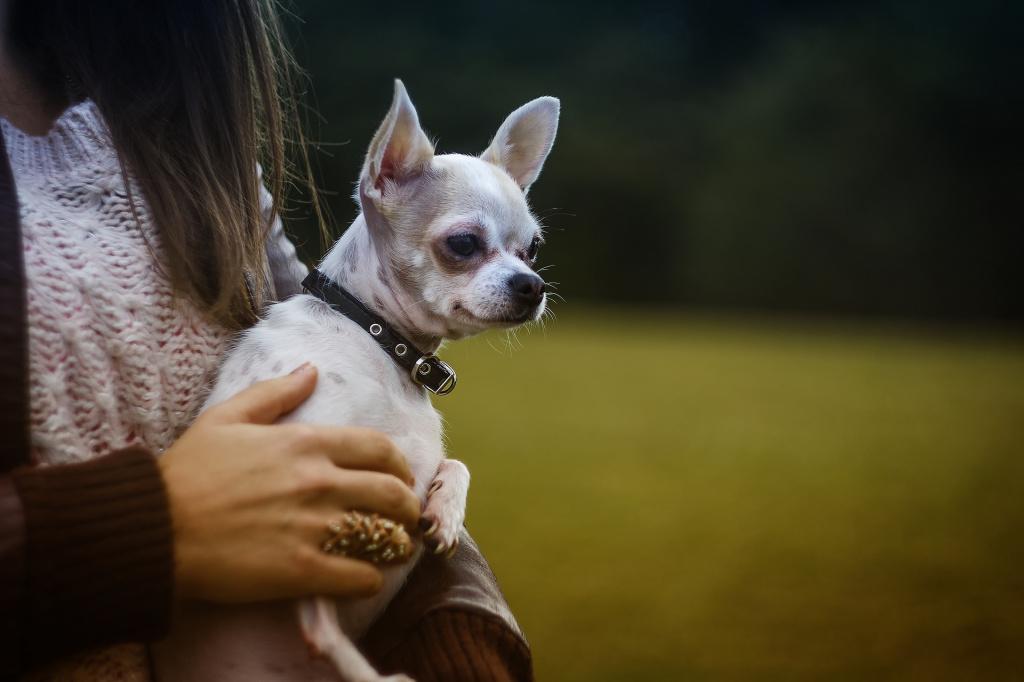 Как приручить собаку и завоевать ее доверие