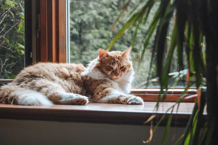 Противопоказания по использованию фурминатора для кошек