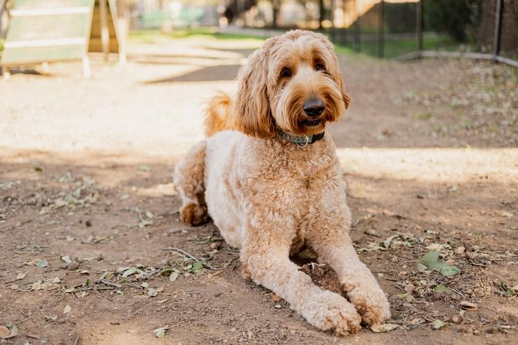 как научить собаку командам на курсах спасателей