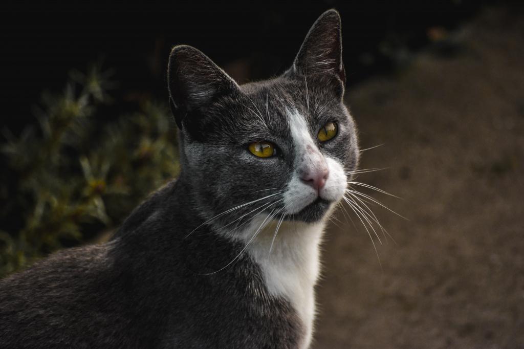 Разновидности лишая у кошек